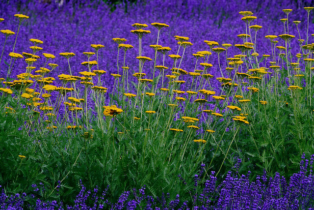 flower-flora-nature-summer-field picture material