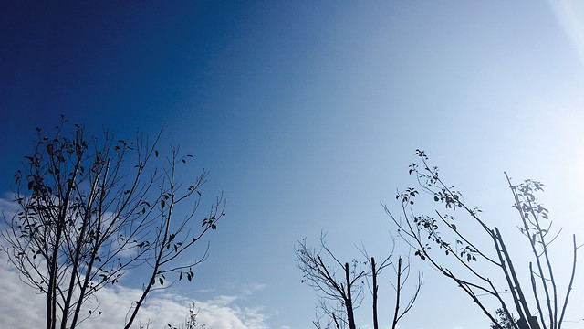 sky-no-person-nature-winter-tree 图片素材