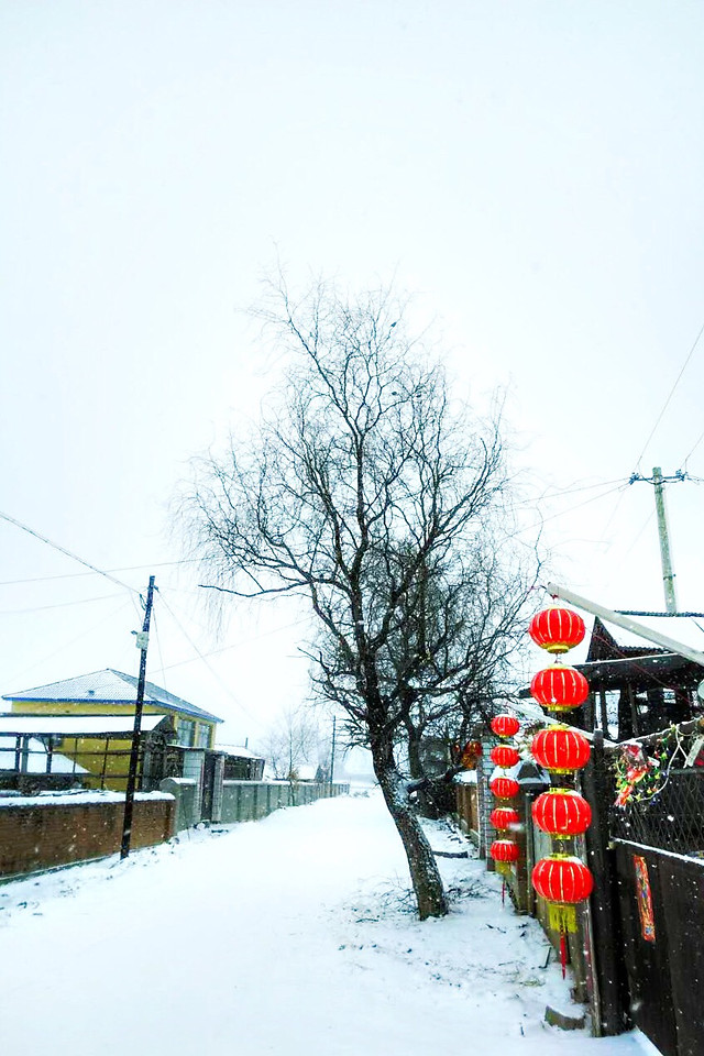 winter-snow-weather-landscape-tree picture material