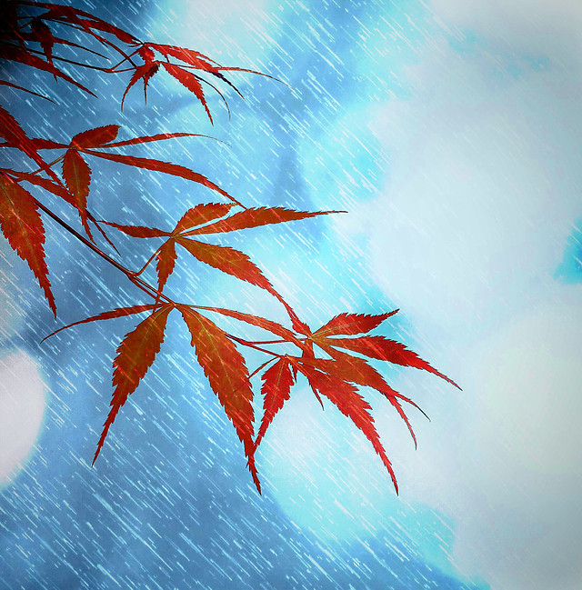 leaf-fall-desktop-blue-nature picture material