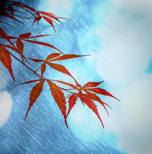 leaf-fall-desktop-blue-nature 图片素材