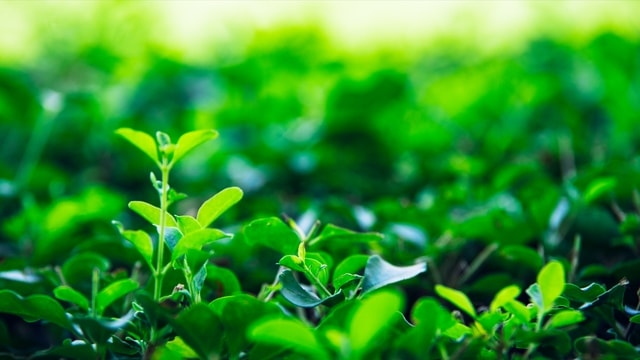 light-natural-vitality-green-nature picture material