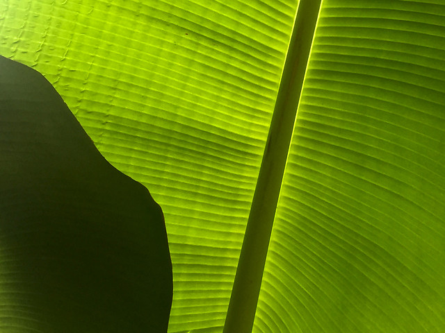 leaf-flora-growth-photosynthesis-green 图片素材