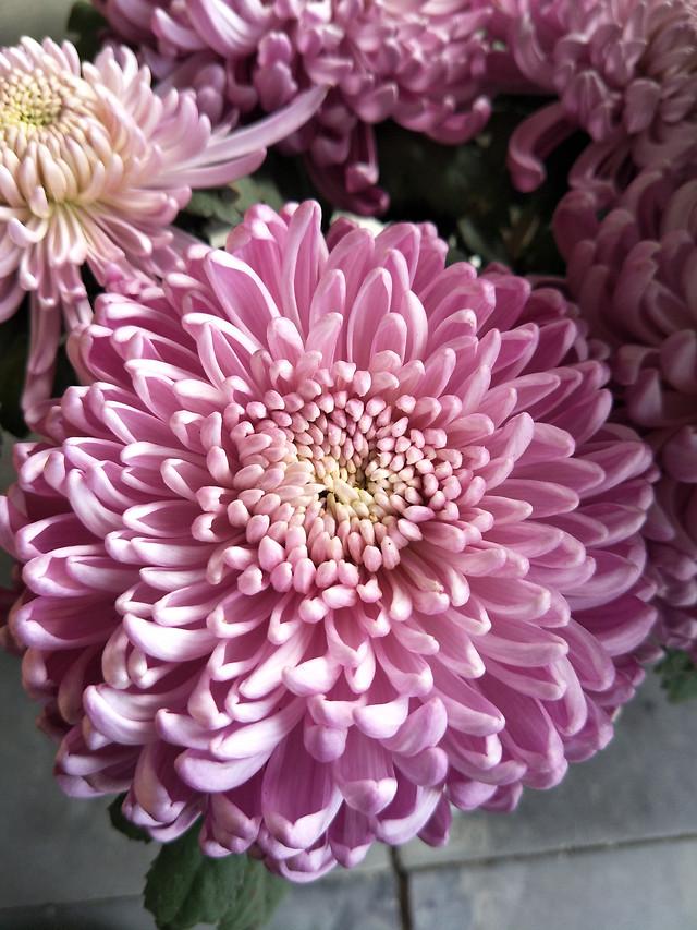 flower-flora-nature-petal-floral picture material