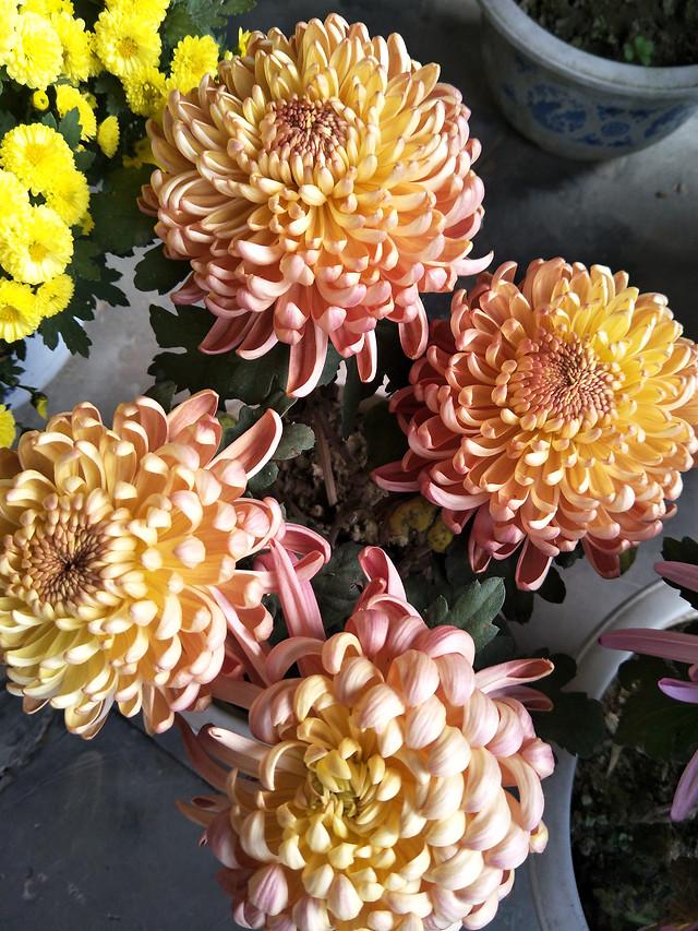 flower-nature-flora-color-petal picture material
