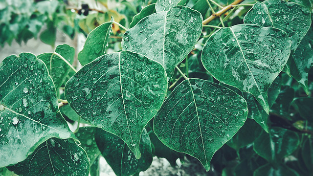 leaf-flora-nature-green-rain picture material