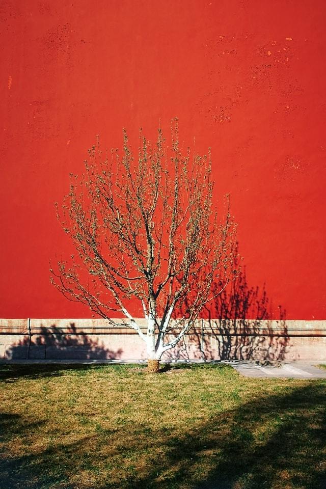 tree-red-leaf-woody-plant-plant 图片素材
